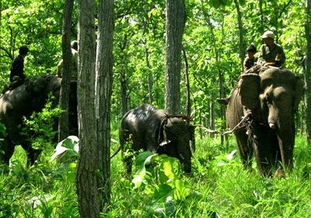 Cứu hộ một con voi bị mắc bẫy (Ảnh: VietNamNet)