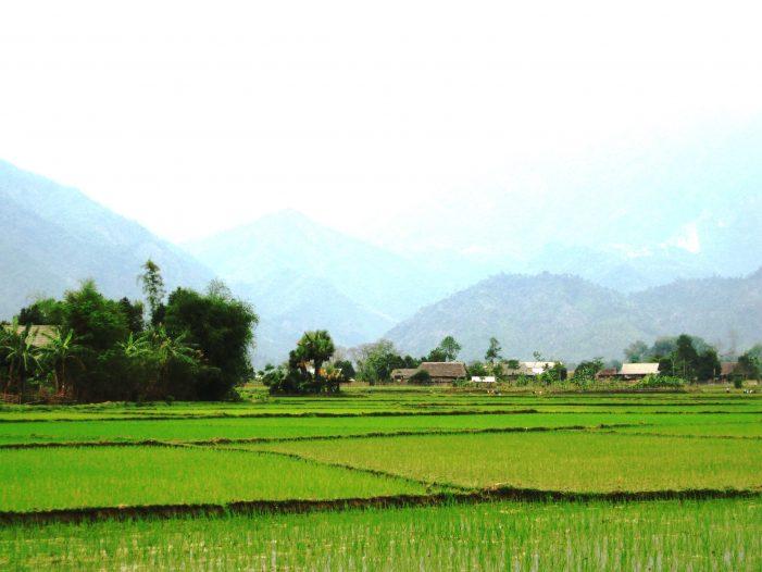Lấy đất lúa phải được Thủ tướng đồng ý