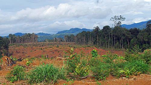 Kon Tum cần khai thác hiệu quả đất rừng