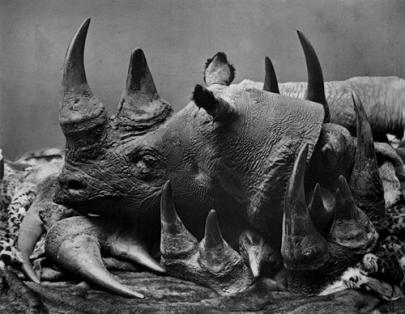 Sự gia tăng nhu cầu sử dụng sừng tê giác đang hủy hoại tương lai của loài động vật này (Ảnh minh họa: iStockphoto.com)