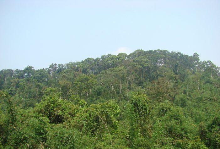 Cây cổ thụ hấp thu nhiều khí CO2