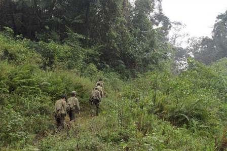 Các nhân viên tuần tra bảo vệ rừng của WWF (Ảnh: WWF)