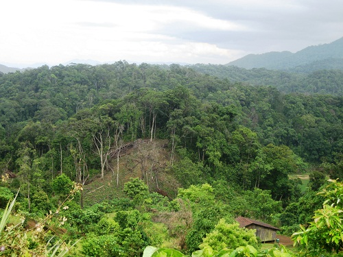 Tháo gỡ khó khăn trong khôi phục rừng vùng Tây Nguyên