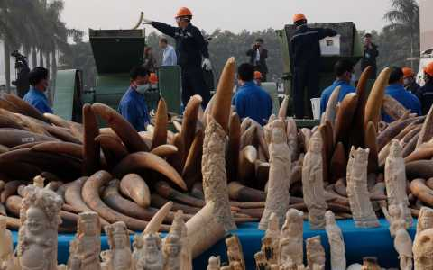 Mỹ siết chặt các quy định cấm buôn bán ngà voi