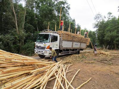 Bóc tách đất rừng ở Khánh Vĩnh: Còn nhiều băn khoăn