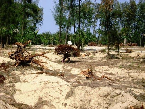 Rừng ở ven biển TP Tuy Hòa, tỉnh Phú Yên ngày càng teo tóp vì các dự án ì ạch (Ảnh: Hồng Ánh/nld.com.vn)