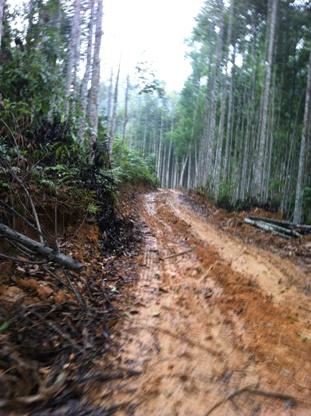 Cây rừng bị đốn hạ làm đường vào bãi quặng lậu (Ảnh: Pháp luật Việt Nam)
