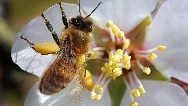 Ong chết hàng loạt và hệ lụy đối với hệ sinh thái