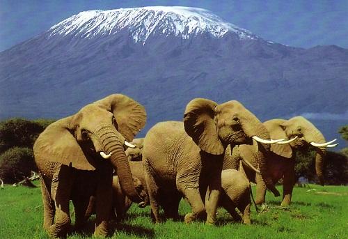 Kenya: Luật bảo vệ động vật mới ban hành đã nhiều kẽ hở