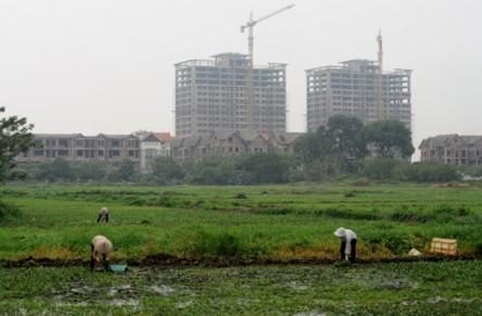 Ruộng ở gần các khu đô thị bị bỏ hoang vì không đủ điều kiện sản xuất (Ảnh minh họa: Dân Việt)