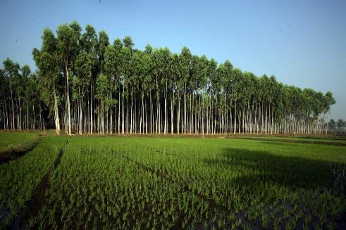 Dự đoán năm 2050, diện tích đồn điền trồng cây công nghiệp toàn cầu sẽ đạt khoảng 91 triệu héc-ta (Nguồn ảnh: Itcpspd.com)