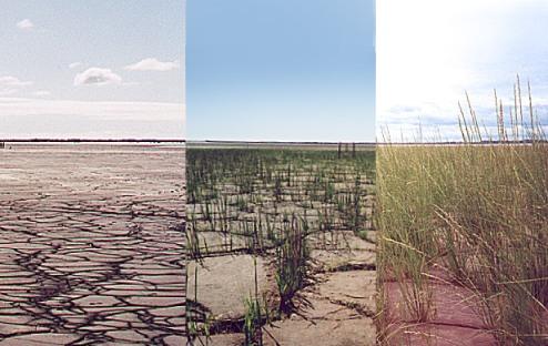 Duy trì thảm thực vật trên mặt đất là một trong những cách phục hồi đất hiệu quả (Ảnh: Prairie Plant Systems Inc.)