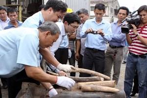 Đề xuất tiêu hủy kho sừng tê giác và ngà voi bị thu giữ