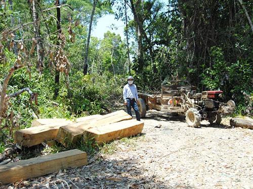 Một bãi tập kết gỗ lậu bên đường, cách trạm quản lý bảo vệ rừng của Công ty Lâm nghiệp Quảng Đức khoảng 1 km (Ảnh: Bình Nguyên/nld.com.vn)