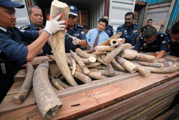 Thái Lan tịch thu 22kg ngà voi được khai nhận sẽ chuyển về Việt Nam