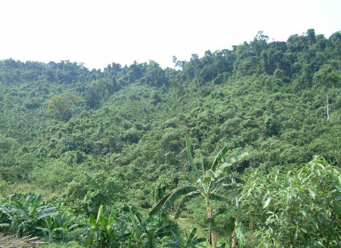 Lựa chọn quản lý rừng theo mô hình cộng đồng