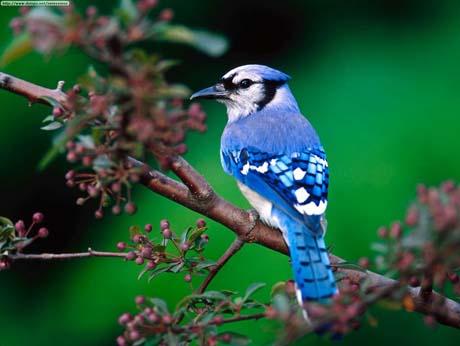 Thế giới động vật màu xanh kỳ lạ