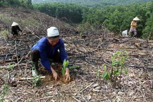 Triển khai kế hoạch nâng cao năng suất và giá trị rừng trồng