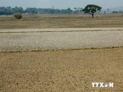 Một cánh đồng nứt nẻ vì khô hạn ở Đắk Lắk (Ảnh: Ngọc Hà/TTXVN)