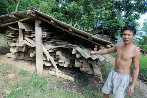 Đống gỗ làm nhà của gia đình anh Lò Văn Lả chờ đất TĐC đang bị mối, mọt tàn phá (Ảnh: nongnghiep.vn)
