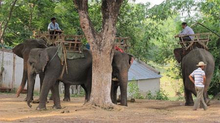 Đàn voi nhà bị khai thác quá mức trong dịch vụ du lịch tại Đắc Lắk (Ảnh: Quân đội Nhân dân)
