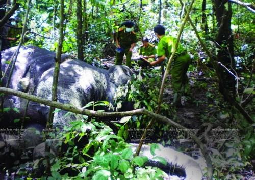 Cơ quan công an đang kiểm tra hiện trường vụ hai cá thể voi hoang dã bị giết chết trong Vườn quốc gia York Đôn vào tháng 8/2013 (Ảnh: Báo ảnh Việt Nam/Vietnam+)