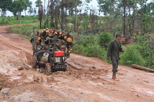 Xe chở gỗ lậu ung dung qua trạm bảo vệ rừng của Công ty TNHH MTV Lâm nghiệp Cư M'lanh, Đắk Lắk (Ảnh: nld.com.vn)