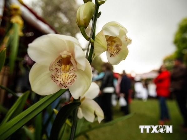 Vẻ quyến rũ, kiêu sa của hoa lan tại triển lãm ở Colombia