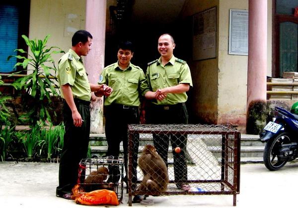 VQG Hoàng Liên – Sa Pa tiếp nhận 2 cá thể khỉ có tên trong Sách đỏ
