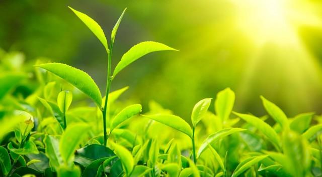 Tìm ra cách mới tạo oxy mà không cần quang hợp thực vật