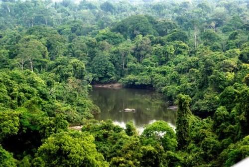 Khu bảo tồn Alto Maues. (Ảnh: wwf.org.br)