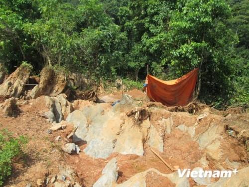 ''Lâm tặc'' vẫn đang từng ngày xẻ thịt Khu bảo tồn thiên nhiên Kim Hỷ. (Ảnh: Nguyễn Trình/VietnamPlus)