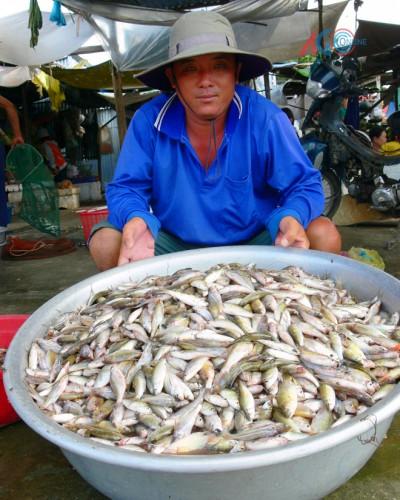 Bưng thau cá chạch, cá chốt, cá linh lộn xộn từ dưới xuồng lên, bàn tay hai Lượng móp méo và run bần bật vì lạnh. (Ảnh: Thành Chinh)