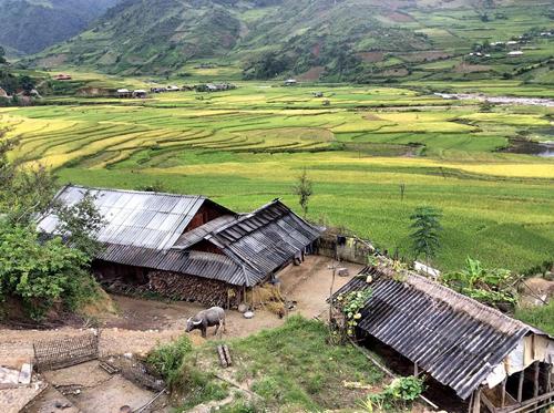 Tấm lợp fibroximang được rất nhiều người dân miền núi, nông thôn sử dụng trong xây dựng nhà ở, công trình dân sinh. (Ảnh: Báo Tin Tức)