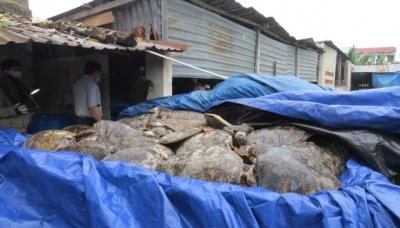 Một trong bốn bể chứa rùa biển ngâm tẩm phóc môn còn tươi được phát hiện sáng 19-12. (Ảnh: Nhân Dân)