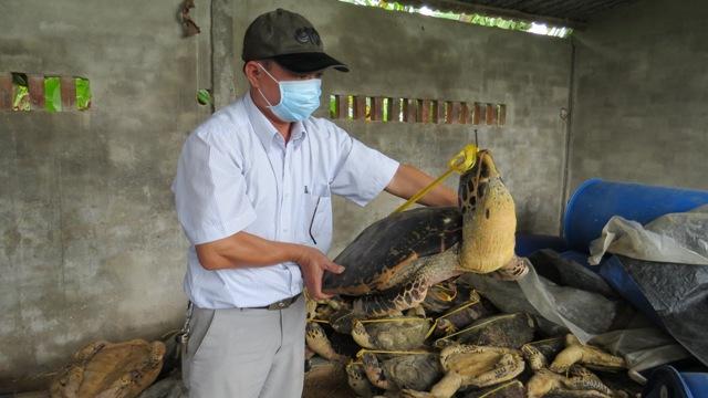 Rùa biển bị tàn sát số lượng lớn ở Nha Trang