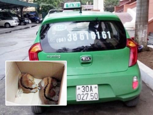2 cá thể cu li được phát hiện trong chiếc xe taxi. (Ảnh: An ninh Thủ đô)