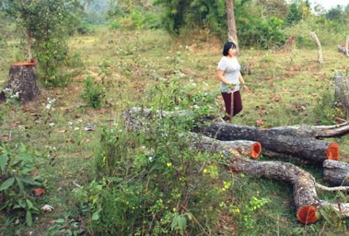 Những cây gỗ to nhỏ bị hạ nằm ngổn ngang. (Ảnh: Công an TP Đà Nẵng)