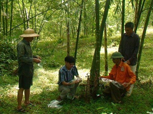 Cán bộ kỹ thuật hướng dẫn bà con nông dân cách phòng chống sâu bệnh cho cây luồng. (Ảnh: nongnghiep.vn)