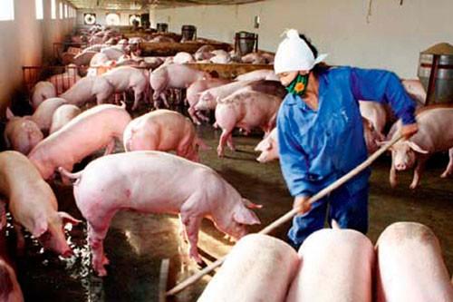 Xử lý tốt các chất thải trong chăn nuôi sẽ góp phần giảm ô nhiễm môi trường nông thôn. (Ảnh: Lê Lâm)