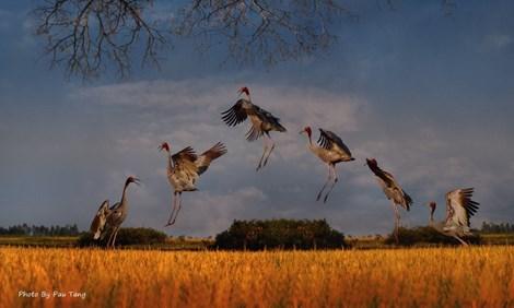 Triển lãm ảnh quyên góp tiền cứu hộ chim quý hiếm