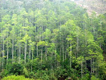 Mô hình lợi ích kép: Rừng gỗ lớn