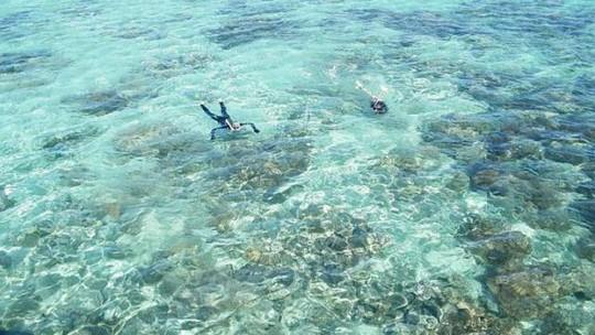 Tăng nỗi lo khi phát hiện san hô ăn vụn nhựa (Ảnh: Madihah Hamid)