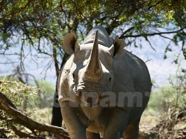 Khởi động chương trình cùng hành động bảo vệ động vật hoang