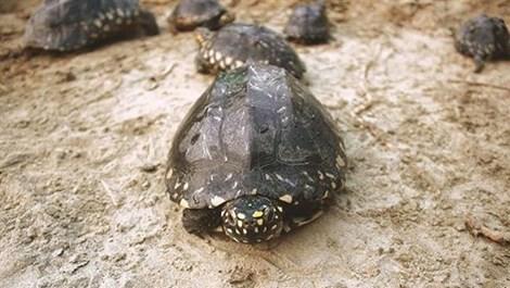 Tịch thu 2 tấn thịt rùa lậu trị giá hơn 127 tỉ đồng