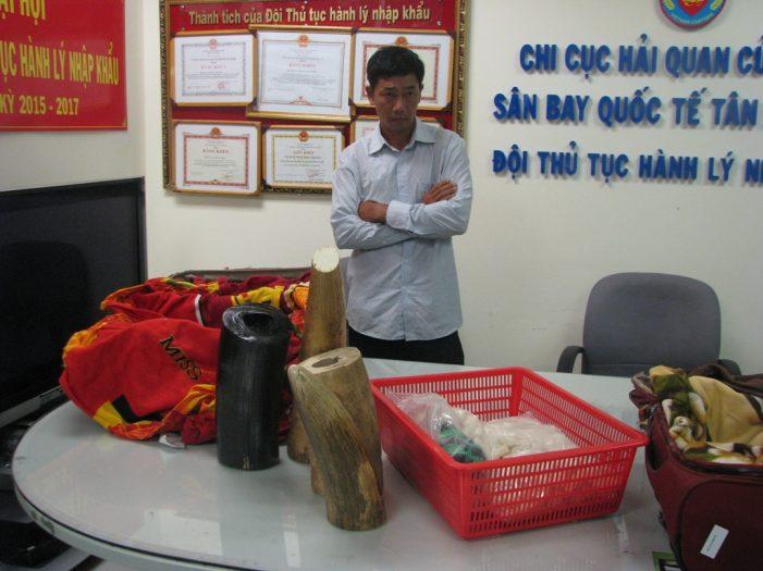 Bắt giữ nhiều lô hàng ngà voi, sừng tê giác qua sân bay quốc tế Tân Sơn Nhất