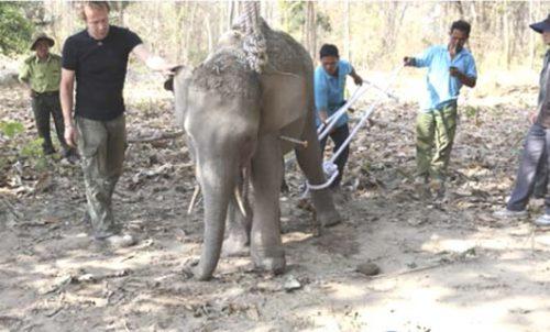 Không có khuôn viên, TTBTV Đắc Lắc đành phải nhờ đến Vườn quốc gia Yok Đôn làm nơi cứu chữa voi rừng. (Ảnh: Công an  TP Đà Nẵng)