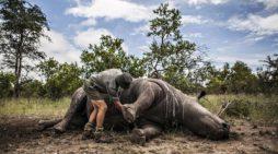 Động vật xương sống toàn cầu giảm 60% trong vòng hơn 40 năm