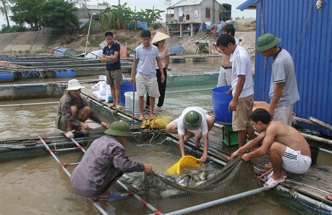 Cá lăng sông Hồng đem đến giàu có