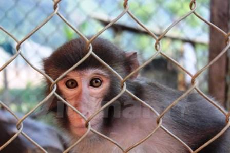 Tuyên Quang: Người dân vô tư rao bán khỉ ở gần khu bảo tồn
